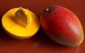 Internet: Microsoft distriburas le Mango ce soir et autres infos