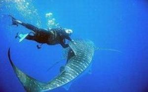 Insolite:à dos de requin