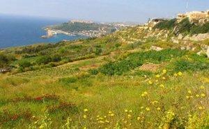 Malta news: nursing posts
