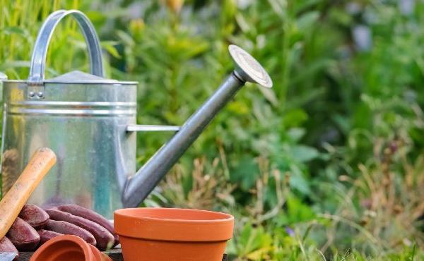 Le désherbant phare de Monsanto bientôt absent des jardineries
