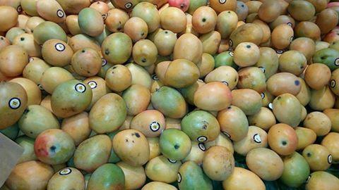 Ces mangues coûtent 15 euros le kg en France et moins de 500 FCFA au Sénégal soit 75 centimes