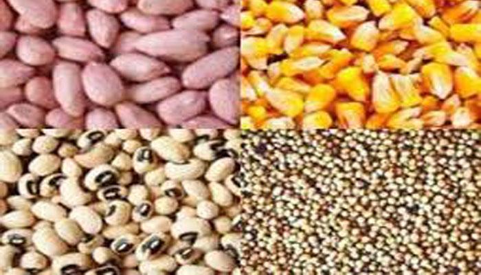 SENEGAL-AGRICULTURE LES PRODUCTEURS REDOUTENT QUE LES SEMENCES CERTIFIÉES N'ENTRENT DANS LE CIRCUIT DE LA COMMERCIALISATION