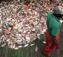 """SENEGAL-MONDE-PECHE-GOUVERNANCE Ressources halieutiques : la conférence de Bali ouvre """"une nouvelle ère"""" de transparence (communiqué)"""