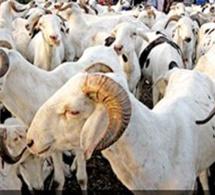 SENEGAL-RELIGION-CONSOMMATION: Plus de 4 ménages sur 5 ont sacrifié une bête lors de la dernière Tabaski (ANSD)