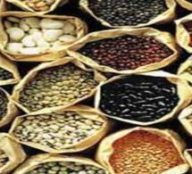 SENEGAL-AGRICULTURE : Des techniciens formés à la protection des semences à Kaolack