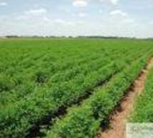 SENEGAL-AGRICULTURE-PERSPECTIVES -BIGNONA : UNE ASSOCIATION VEUT ENCADRER 3000 PRODUCTEURS ET EMBLAVER 5000 HECTARES EN 2017